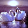 Picadilo_Facebook - Swans With Heart Shape